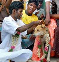 dog_marrying_20071115
