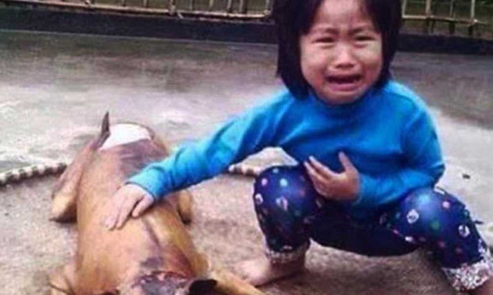 vietnam girl dog meat