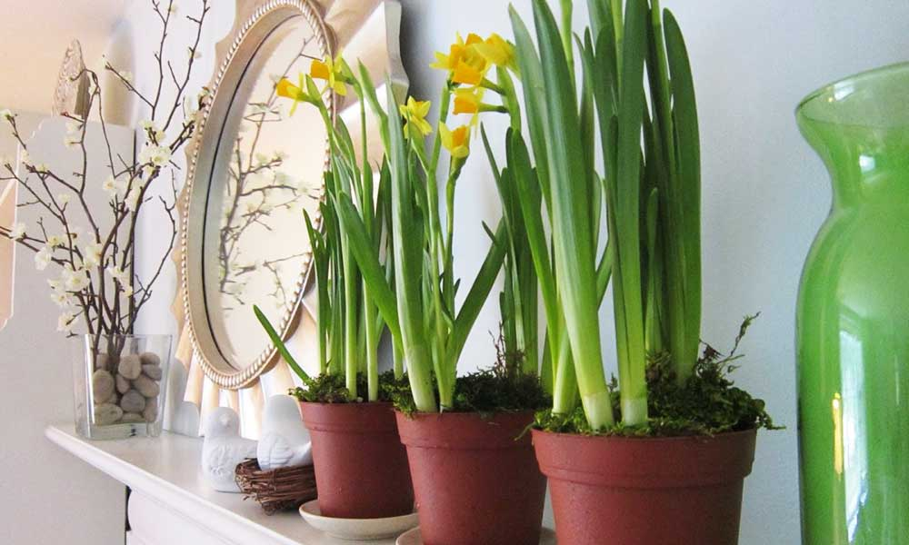 Simple-Garden-Using-Potted-Flower-Plants-for-Home-Interior