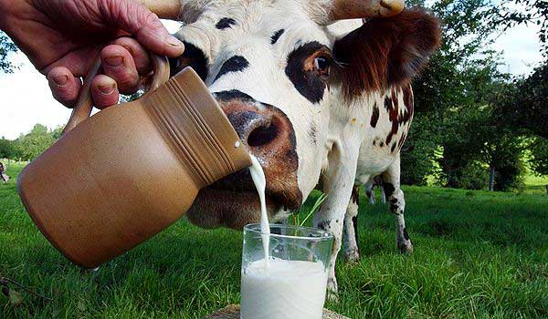 dairy-industry