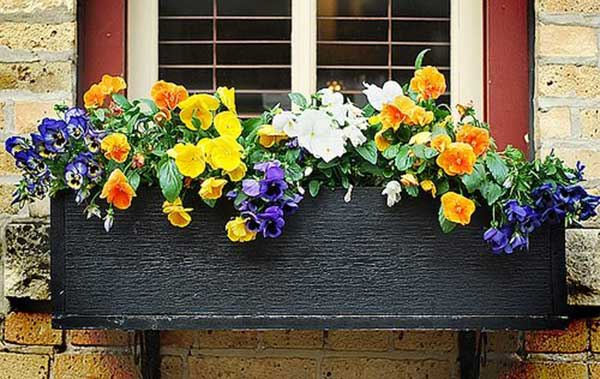 flowers-windows-boxes