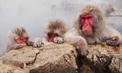 बंदरों कों श्रृद्धाजंली