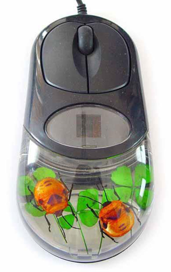 real_insect_computer_mouse