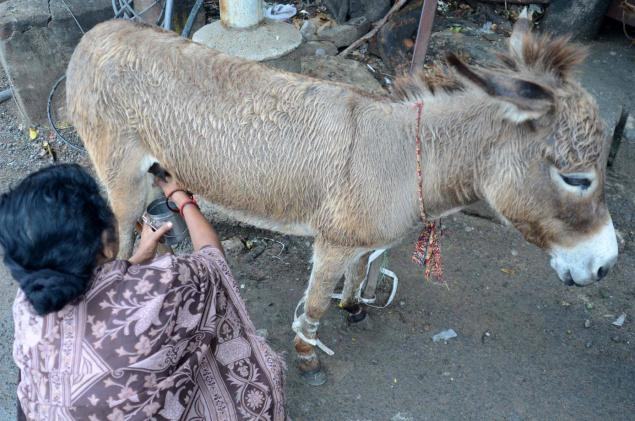Donkey milk does not contain properties to eliminate swine flu