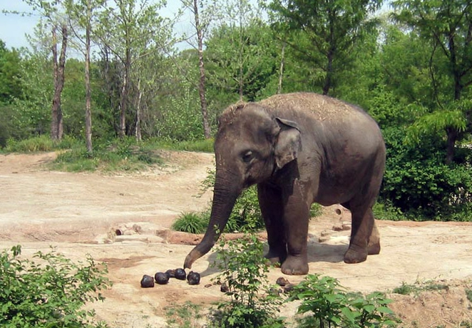 Elephant poop is used to make paper