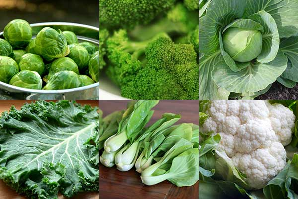 Vegetables that reduce fat