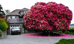 10 Oh So Beautiful Trees That Seem Like Paintings