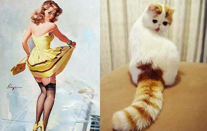cats posed as girls