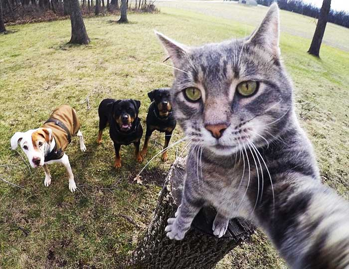 selfie addicted animals