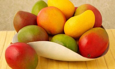 yummy tummy mangoes