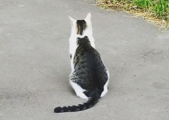 Cat With A Cat Spot On Back
