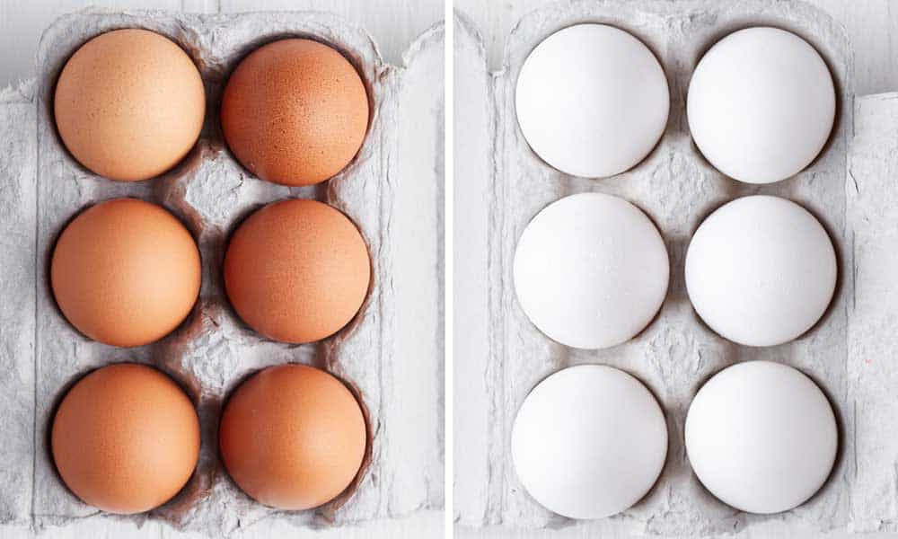 Brown eggs vs white eggs