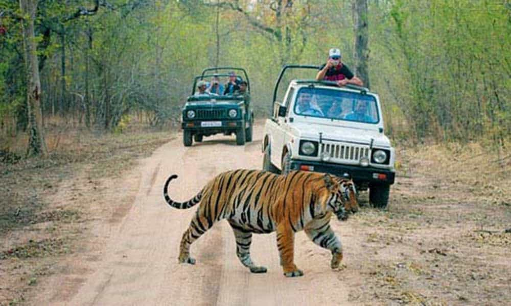 Wild life sanctuaries of India