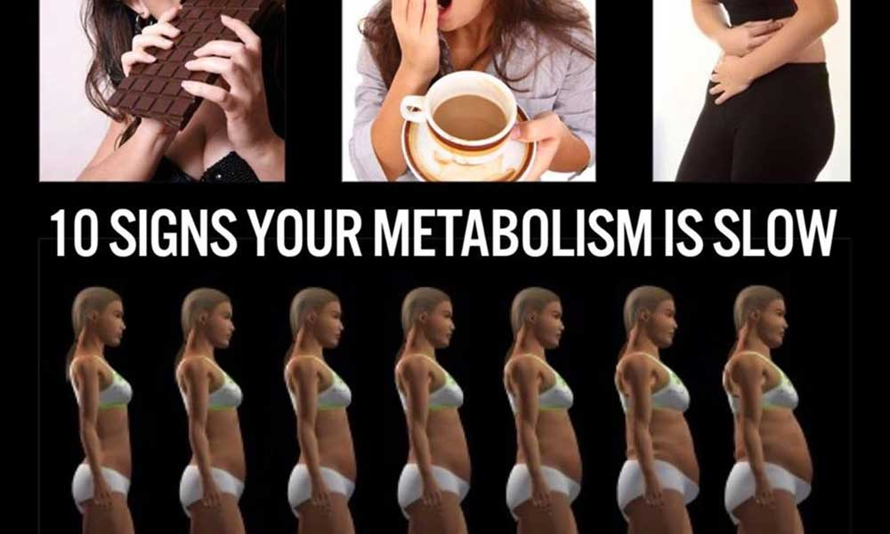 Slower metabolism rates