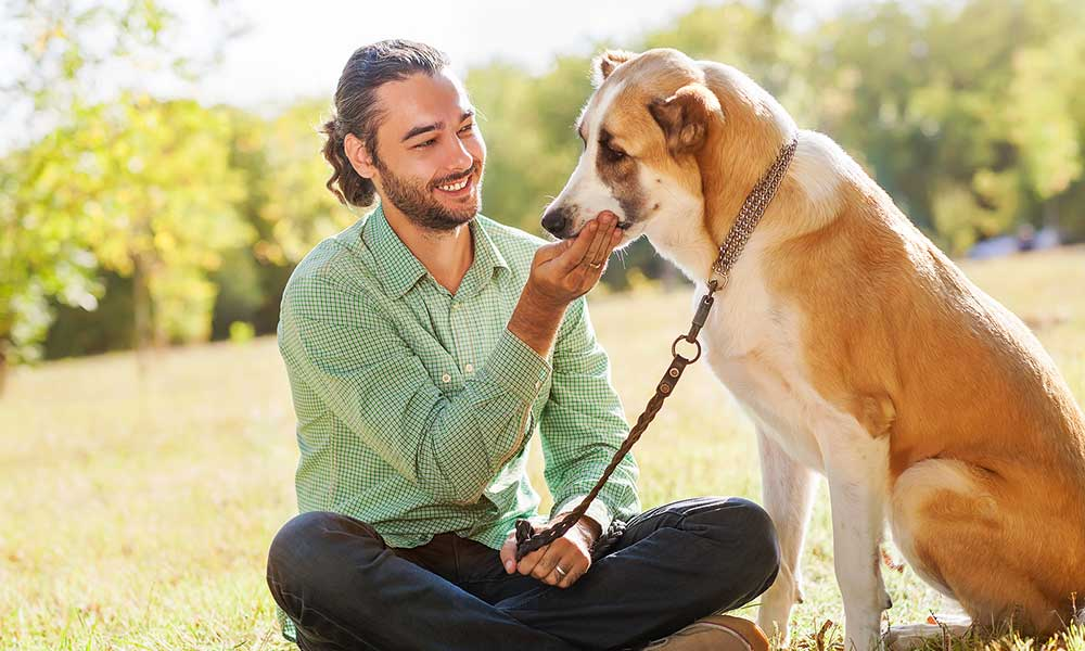 Reasons Why Dogs Are Best Friends