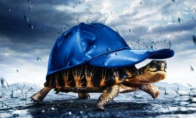 Funny monsoon photos