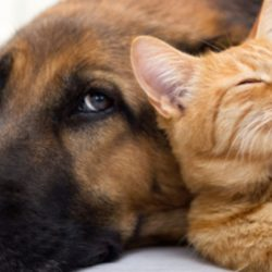 Pets video clips