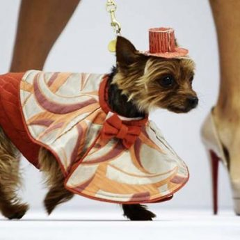 style of pet