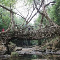 Natural-living-root-bridge