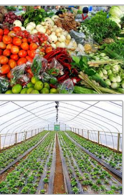 vegetable-market-small-business