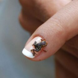 smallest animal 7